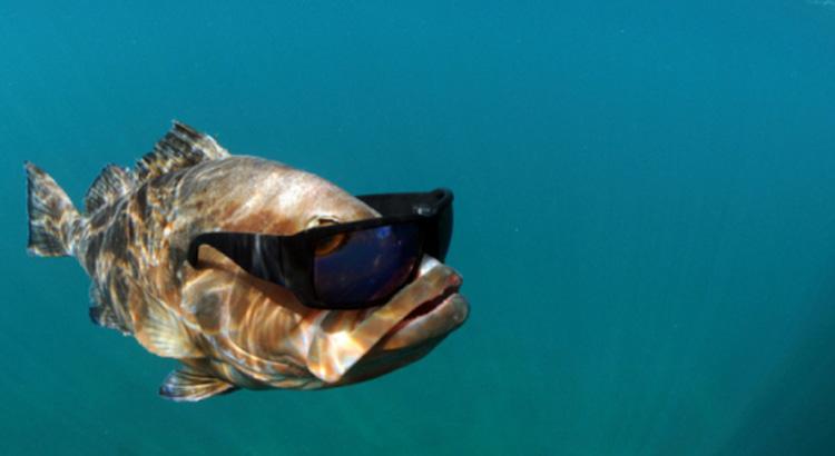 poisson cool portant des lunettes de soleil