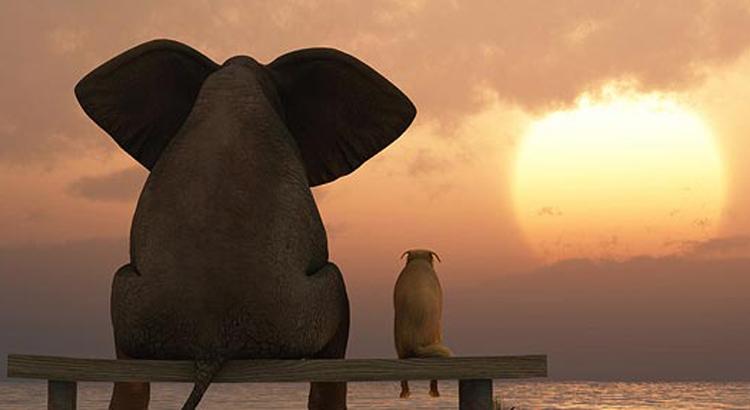 elephant et chien couche de soleil